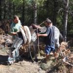 Traditional biomass transportation in Vistabella (1)