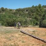 Traditional biomass transportation in Vistabella (2)